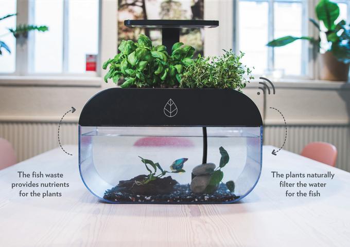 EcoGarden: The World's Smartest Interactive Ecosystem