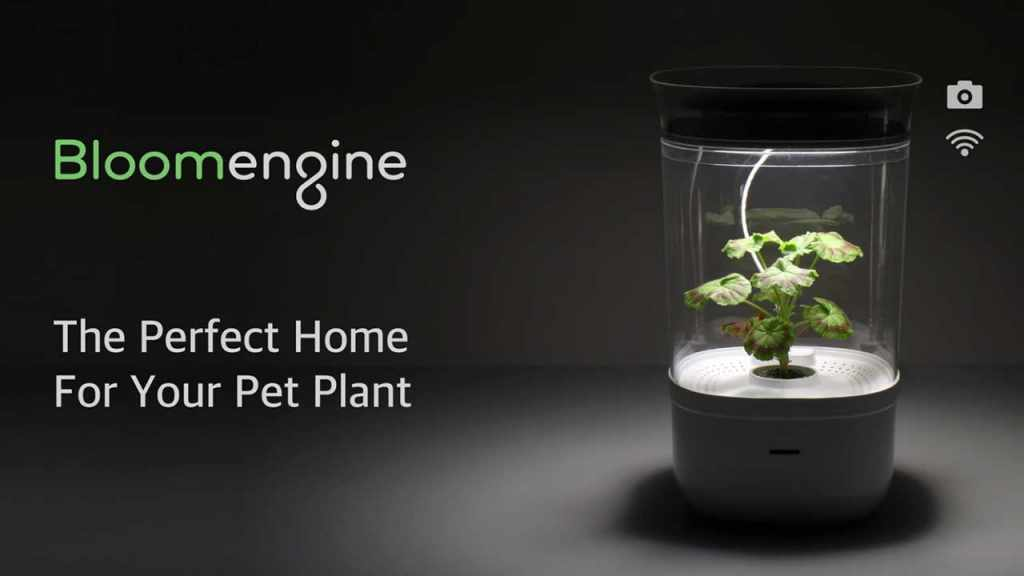 Bloomengine: The Perfect Home For Your Pet Plant